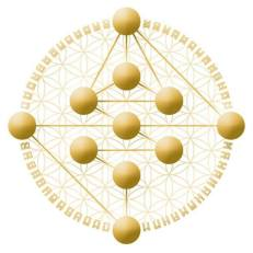 perfil hologenético